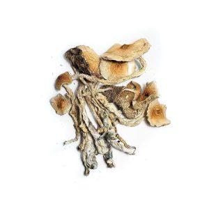 Brazilian Mushrooms