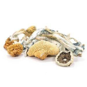Blue-Meanie-Mushrooms